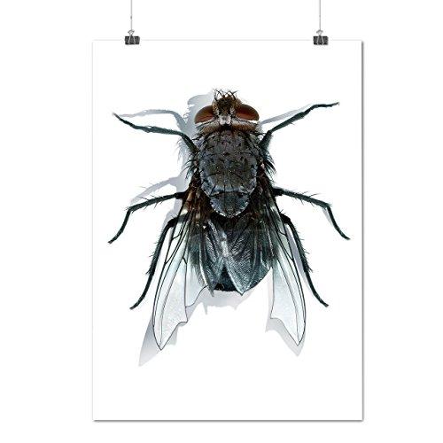 mouche-bleu-bouteille-se-glisser-insecte-matte-glace-affiche-a2-60cm-x-42cm-wellcoda