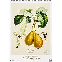 Pierre-Antoine Poiteau: Alte Obstsorten 2019 – DUMONT Kunst-Kalender – Poster-Format 49,5 x 68,5 cm