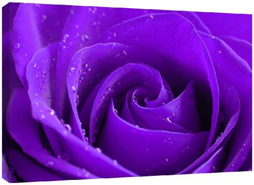 mool-tela-con-rosa-su-telaio-in-legno-vernice-impermeabilizzante-pronta-da-appendere-81-x-56-cm-colo