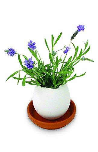 noted* Pot de Fleur en Fore d'oeuf cassé - Lavande