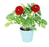 Idee HIGH GROSSER Promotion! 50 Stück Dalia Bonsai Dalia Chinesische Bonsai Blume, Ornamentale Pflanze in Pflanzkübel für Garten, Pflanzenpflanze: 22