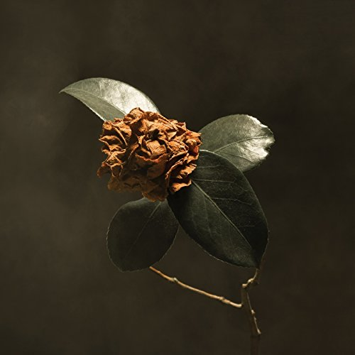Young Sick Camellia