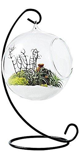 Mkouo Pflanzgefäß zum Aufhängen Terrarium Glas für Sukkulenten/Bromeliengewächse Air Pflanzgefäß Container mit Metall Ständer Home Office Hochzeit Dekoration