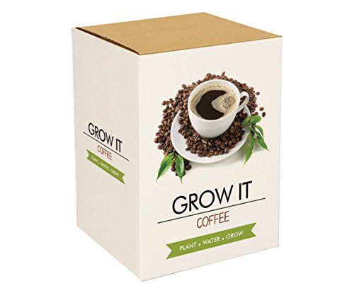 Galleria fotografica Grow it caffè - kit per coltivare piantine caffè