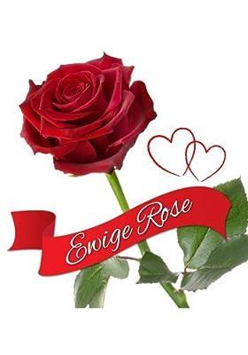 """Ewige Rose """"Ich liebe Dich"""" von shoppingwunder - Du und dein Garten"""