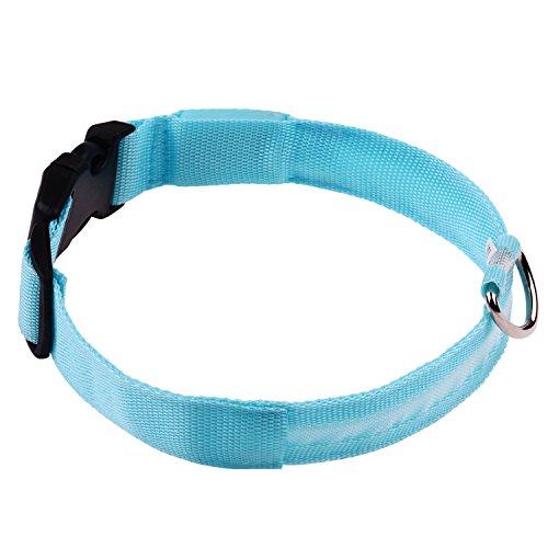 Sijueam Nylon USB Hundehalsband LED Halsband Leuchthalsband mit USB Kabel für Haustier Hunden Blau (Bleiben Mode-band)