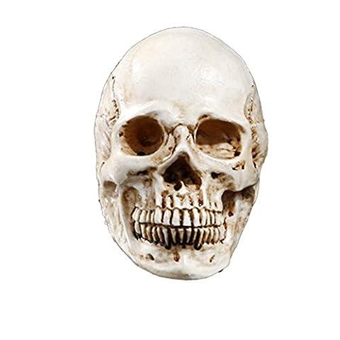 Homosapiens Schädel Statue Figurine Menschliche Skelett Kopf Dekor Weiß