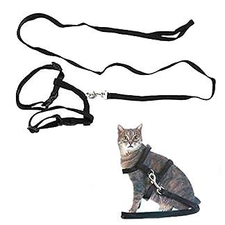 Adjustable Pet Cat Kitten Lead Leash Harness Set Nylon Collar Belt Safty Training 41nyox 2Bt1rL