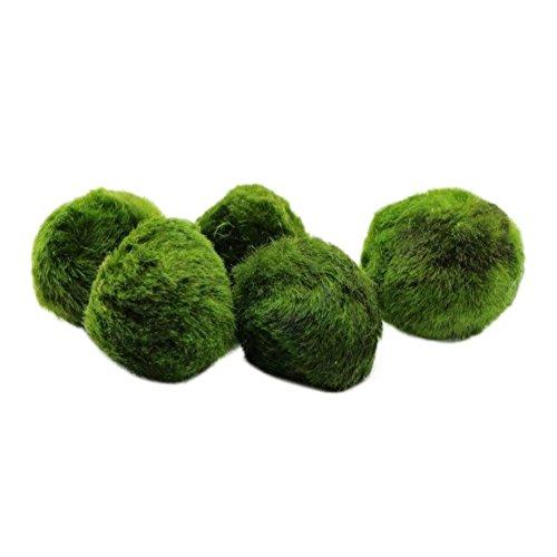 Etophigh Moosbällchen, sicherer Dekorationsaquarium-Lebendmoosball, natürlicher Lebensraum/für lebende Fische, Haustiergarnelen und mehr Gras-Aquarium-Landschaftsgestaltung