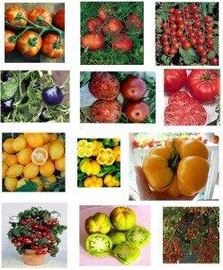 Tomaten Samen Mischung, Sammlung -10 Päckchen, 10 Sorten, 100 Samen