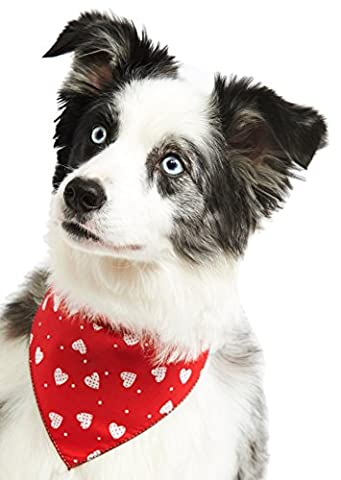 Pet Pooch Boutique Patchwork Hearts Bandana for Dog, Medium/Large,