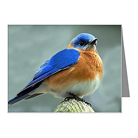 CafePress - Male Bluebird - Blank Note Cards (Pack of 10) Glossy