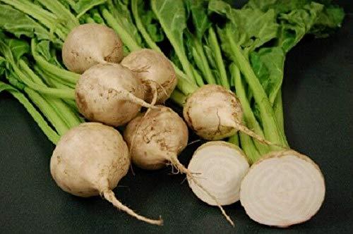 Samen-Paket Nicht Pflanzen: 300SD: (150) 'King' Qualität Weiß Roter-Bete-Avalanche F1 300 - Garten Gemüse