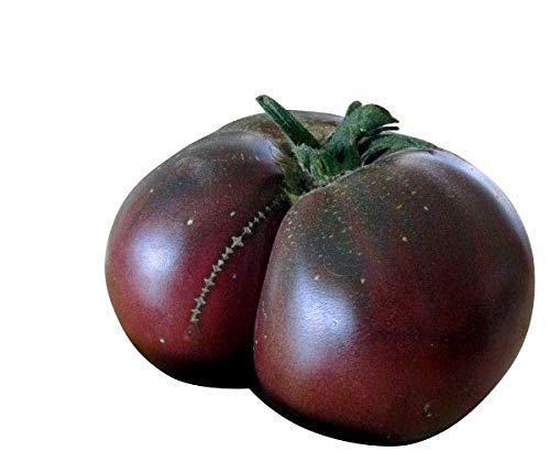 Tomate 'Brandywine Black' 10 Samen ''Super Aromatische Tomatensorte''