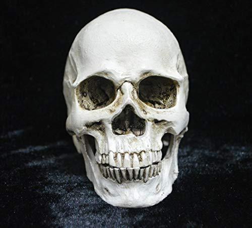 DDOQ Lusso Ornamenti di Teschi di Resina, Cranio di Resina Forniture di Fantasmi di Halloween Giocattoli di Teschi Cranio di Resina Decorazioni per la casa spettrale.