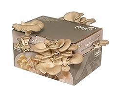 Hawlik Pilzbrut - große XXL Austernpilzkultur Zuchtset - Pilzkultur zum selber züchten - kinderleicht frische Pilze ernten