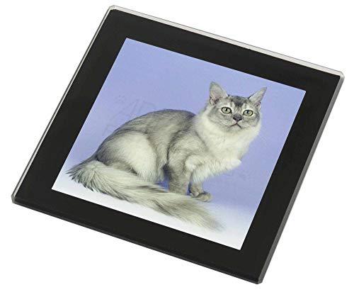 Advanta - Glass Coasters Silber Coat Tiffanie Katzen Glasuntersetzer mit schwarzem Rand Weihnachtsgeschen