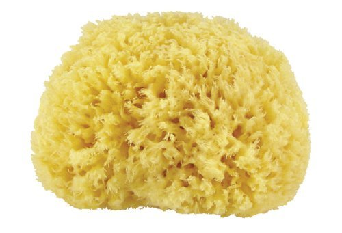 premium-quality-natural-sea-sponge-approx-diameter-10cm