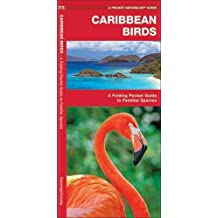 Caribbean Birds: A Folding Pocket Guide to Familiar Species (A Pocket Naturalist Guide)