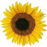 4 Stück Wasserfeste Autoaufkleber / Fensterbild - Sonnenblumen Aufkleber Folien Sticker bunte gedruckte Blume fürs Auto, PKW, Wohnmobil, Decal Flower 9x9 cm