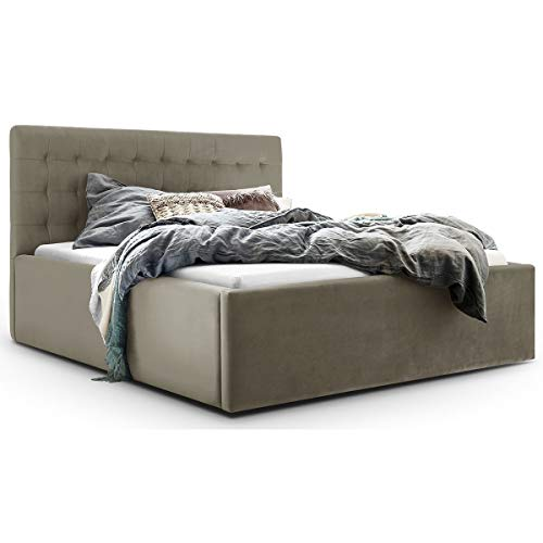 Bett mit Bettkasten Samt Molly XXL-Stauraum Polsterbett Designer Doppelbett Lattenrost massiv (Taupe, 160 x 200 cm)