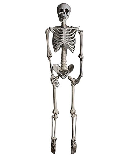 YOUJIA Skelett Mensch Halloween Dekoration Horror Deko Garten Anatomie Menschliches Skelett Modell Lebensgroße Figuren 160CM (Lebensgroße Halloween-dekoration)