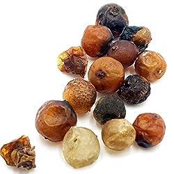 15 getrocknete Mistelbeeren - Samen der Mistel zur Aussaat - Mistelzweige ernten - es entstehen echte Mistelkronen