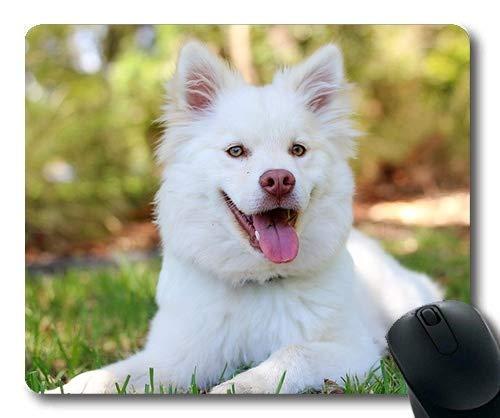 d, Golden Retriever Welpen, hündchen LAPPHOND Liebe süßes Baby Weiße Butter, der Hund Gaming Mouse Pad ()