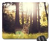 Gaming-Mauspads, Mäusematte, Mops-Hund im Freien Wiese gekleidet mit Kapuze Wald