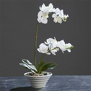 Orchidee artificiali, panna, creme 2 pz, in plastica, colore: bianco, dimensioni: altezza 35 cm