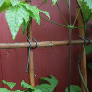 Kreuz-klammer (100 Stück Bambusklammern - Tonkinklammern - zum Rankgitter selber bauen)
