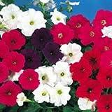 Fiore - Kings Seeds - Confezione Multicolore - Petunia Cascade Mix F1