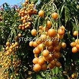 Shopmeeko 100 stücke Japan Kirschgelb Gold Frucht bonsai Bonsai Baum Pflanze Rose bonsai Als Geschenk Für Hausgarten Sehr Einfach Anlage Freies Shippin: Mehrfarbig