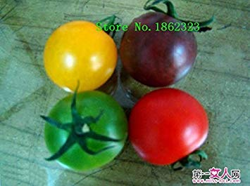 Heiß! 100 Stück 16 Farben Tomatensamen Neue Garten-Blumen-Four Season Säen Welt Seltene Blumensamen für Garten