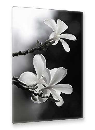 Natur / Schwarz Canvas An (Postereck - Premium Leinwand - 0029 - Frangipani, Schwarz Weiß Blume Natur Baum Blüten - Größe 75,0 cm x 50,0 cm)