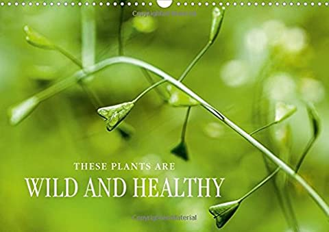 THESE PLANTS ARE WILD AND HEALTHY 2016: Edible wild plants: fascinating, healthy and rich in species.