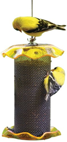 Birds Choice 1Qt. Forever Nigersamen, gelbe Farbe - Forever Feeder
