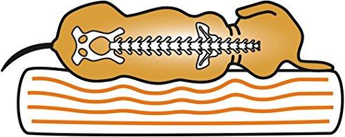 Knuffelwuff 13123 Orthopädisches Hundebett Ortho Bed Jessy – Größe S – M, 73 x 50 x 24cm, beige - 3