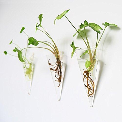 Mkouo Confezione da 2 a schermo piatto da appendere in vetro trasparente vaso fiori vaso contenitore Vaso Terrario Casa Decorazione -- cono M