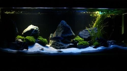 TM Aquatix Aquarium Sand White Fish Tank Substrate Natural Silica 0,5-0,8mm / 5kg 3