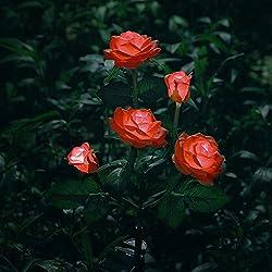 Fleurs à énergie solaire pour décoration de jardin