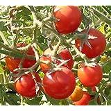 GEOPONICS 5 Paquete de 25 semillas henghaung cereza