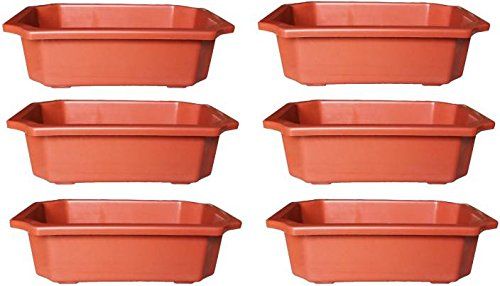 Truphe Bonsai Flower Pots - Terracota or Black (Pack of 6)
