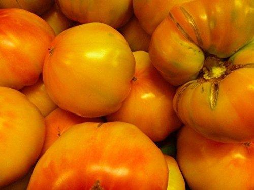 Famous Hungarian purple green Tomato \
