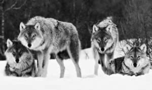 LARGE WOLVES CANVAS PICTURE BLACK AND WHITE 34 X 20 inches mounted and ready to hang by ANIMALS