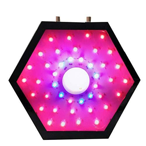 Digiküber Optische Linse Serie LED Pflanzenlampe 1000W LED wachsen Licht Dual 10W Chips Vollspektrum Wachsen mit verstellbarem Schalter für Zimmerpflanzen Gemüse und Blumen 1000 Watt Dual 10