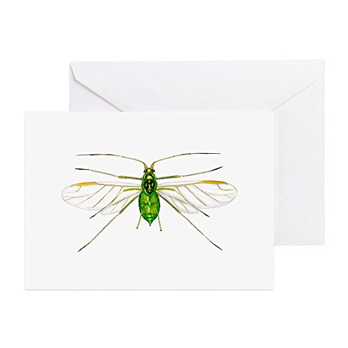cafepress-nettle-aphid-greeting-cards-greeting-card-note-card-birthday-card-blank-inside-matte