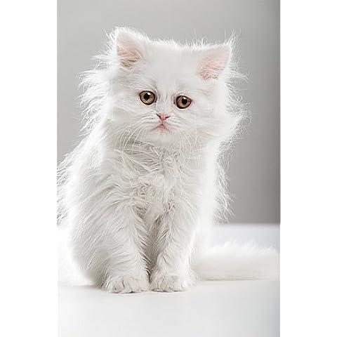 Startonight notte vivida tela dolce gatto bianco, 120 cm x 80 cm - Dolce Grafico