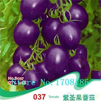 freie Verschiffen Perlen-Tomatensamen, Fruchttomatensamen, non-GMO – 50 Keimteilchen