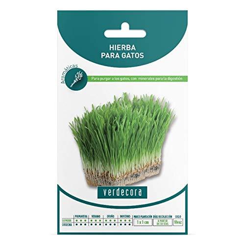 Verdecora | Semillas hierba para gatos - Hierba Gatera - Hierba para Gatos - Sobre con Semillas Hierbas Aromáticas - Semillas aromáticas